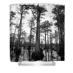 Stately - Cypress Trees Shower Curtain by Jane Eleanor Nicholas