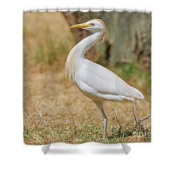 Shower Curtain featuring the photograph Stately Walking Cattle Egret by Nick Biemans