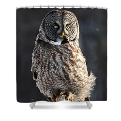 Steadfast In The Wind Shower Curtain