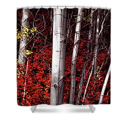 Stealing Beauty Shower Curtain