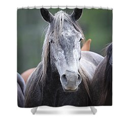 Steel Grey Shower Curtain by Diane Bohna