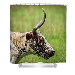 Shower Curtain featuring the photograph Steer Portrait by Paul Freidlund