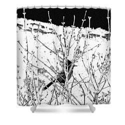 Stellar Jay   Shower Curtain by Will Borden