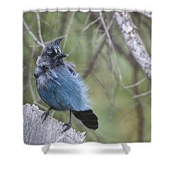 Shower Curtain featuring the photograph Stellar's Jay by Gary Lengyel