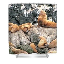 Steller Bull With Harem Shower Curtain