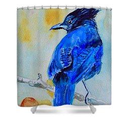 Steller's Jay On Aspen Shower Curtain
