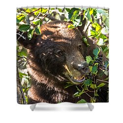 Shower Curtain featuring the photograph Step Away From The Berries by Yeates Photography