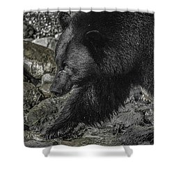 Stepping Into The Creek Black Bear Shower Curtain