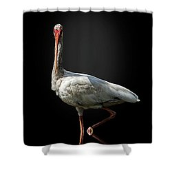 Stepping Out Shower Curtain by Cyndy Doty