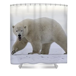 Stepping Out In The Arctic Shower Curtain