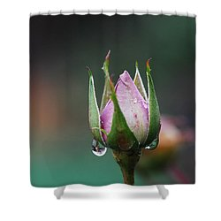 Sterling Rose Shower Curtain by Donna Blackhall