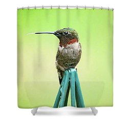 Stick Out Your Tongue Shower Curtain