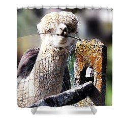 Shower Curtain featuring the photograph Sticks Taste Good by Polly Peacock