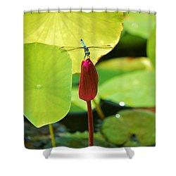 Still Dragon Shower Curtain by William Bartholomew