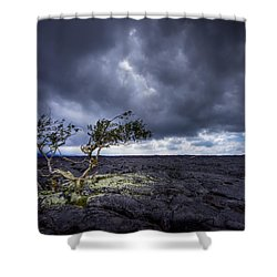Shower Curtain featuring the photograph Still Fighting by Dan Mihai