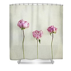 Still Life Of Dried Peonies With Texture Overlay Shower Curtain
