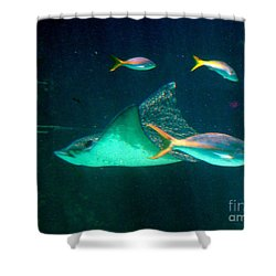 Sting Ray Shower Curtain