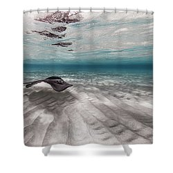 Stingray Across The Sand Shower Curtain
