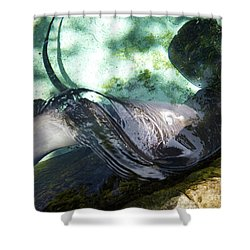 Shower Curtain featuring the photograph Stingray Wave by Francesca Mackenney