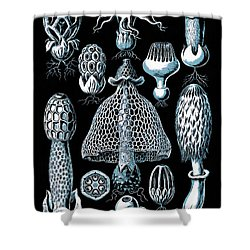 Shower Curtain featuring the drawing Stinkhorn Mushrooms Vintage Illustration by Edward Fielding