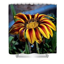 Shower Curtain featuring the photograph Stipped Gazania by Robert Bales