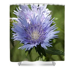 Stokes Aster 20120703_125a Shower Curtain