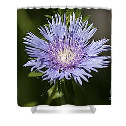 Stokes Aster 20120703_129a Shower Curtain