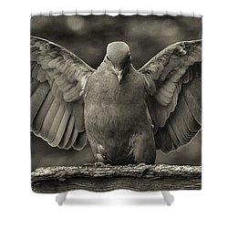 Stone Dove Landing Shower Curtain