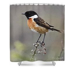 Stonechat Shower Curtain by Terri Waters