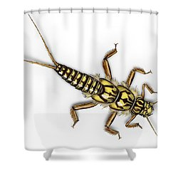 Stonefly Larva Nymph Plecoptera Perla Marginata - Steinflue -  Shower Curtain