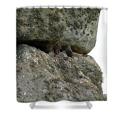 Shower Curtain featuring the photograph Stonehenge Birds by Francesca Mackenney