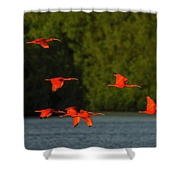 Stop Lights Shower Curtain