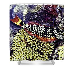Stoplight Parrotfish Initial Phase Shower Curtain