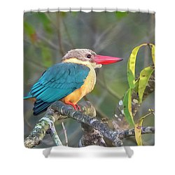 Stork-billed Kingfisher Shower Curtain by Pravine Chester