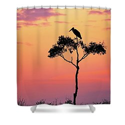 Stork On Acacia Tree In Africa At Sunrise Shower Curtain