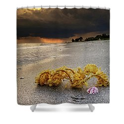 Storm And Sea Shell On Sanibel Shower Curtain by Greg Mimbs