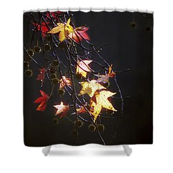 Storm's Bliss Shower Curtain