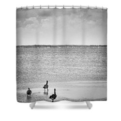 Canada Geese - Currituck Sound Shower Curtain