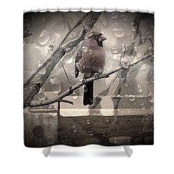 Stormy Window Shower Curtain