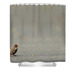 Story Of The Baby Chipping Sparrow 3 Of 10 Shower Curtain