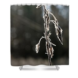 Straw In Backlight Shower Curtain