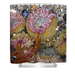 Strawberry Anemonies Shower Curtain