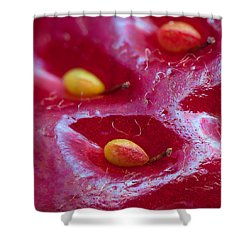 Shower Curtain featuring the photograph Strawberry Fields by Alexey Kljatov