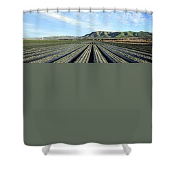 Shower Curtain featuring the photograph Strawberry Fields Forever 3 by Floyd Snyder