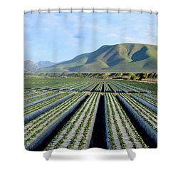 Shower Curtain featuring the photograph Strawberry Fields Forever by Floyd Snyder