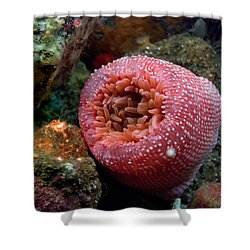 Strawberry Shower Curtain