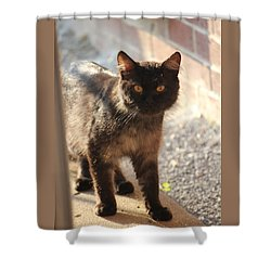 Stray Cat Shower Curtain