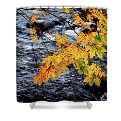 Stream In Fall Shower Curtain