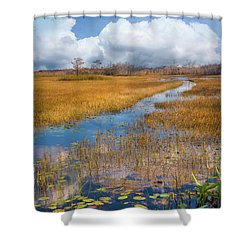 Shower Curtain featuring the photograph Stream Through The Everglades by Debra and Dave Vanderlaan