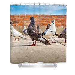 Street Pigeons. Shower Curtain